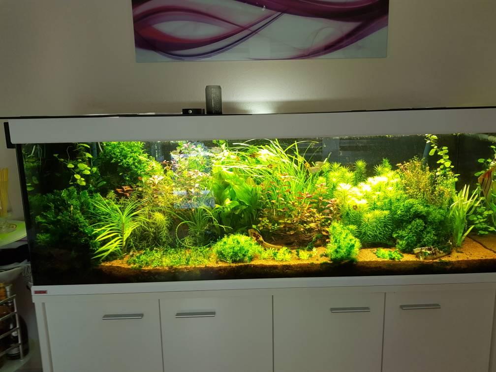 scubaline 640 s damerika seite 3 aquarium forum. Black Bedroom Furniture Sets. Home Design Ideas