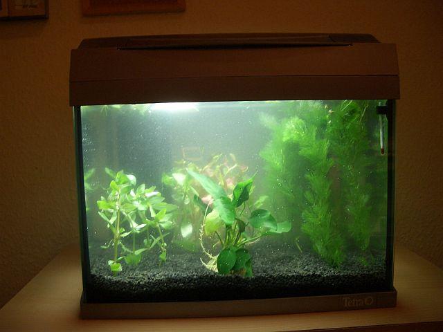 Nochmal kampffisch aquarium forum for Kampffisch aquarium