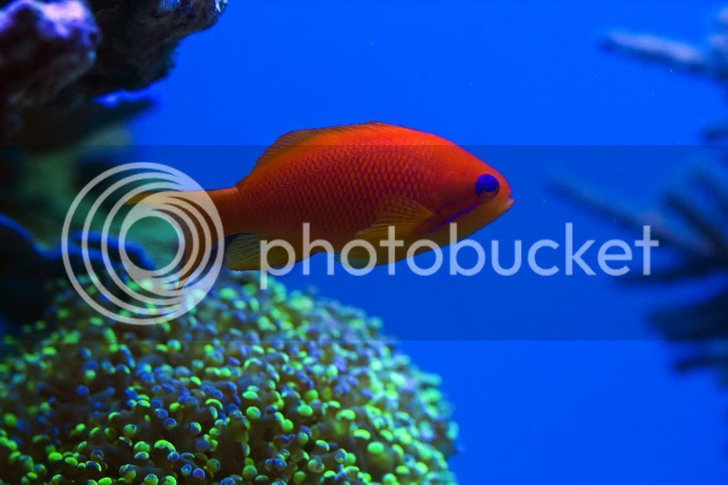 whitecorals 560l - 130 x 60 x 60 - Seite 2 - Aquarium Forum