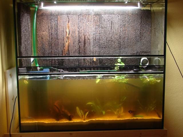 aquariumwasser ist gelb aquarium forum. Black Bedroom Furniture Sets. Home Design Ideas
