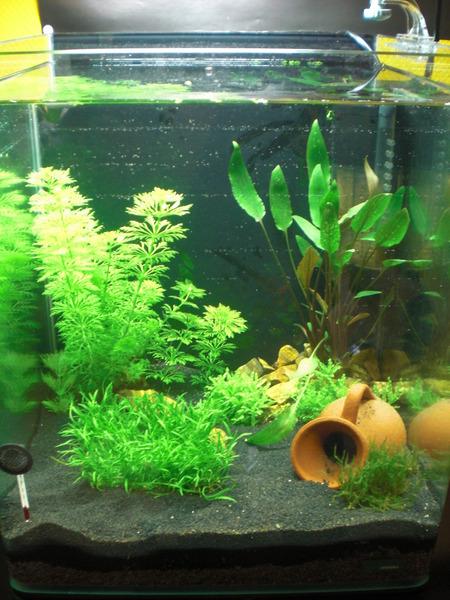 30l aquarium einsteigerfragen wasserqualit t aquarium for Aquarium wasserwechsel