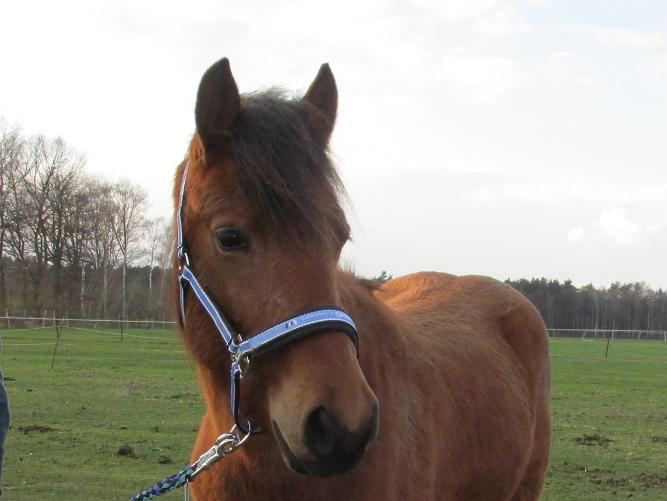 Pferd Forum