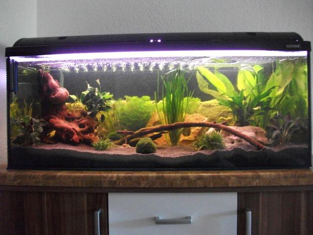 wie schnell wachsen die pflanzen aquarium forum. Black Bedroom Furniture Sets. Home Design Ideas