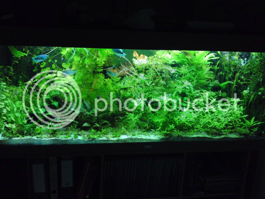 meine beiden 60ger 1mal mit 15watt und ein mit 30watt beleuchtung aquarium forum. Black Bedroom Furniture Sets. Home Design Ideas