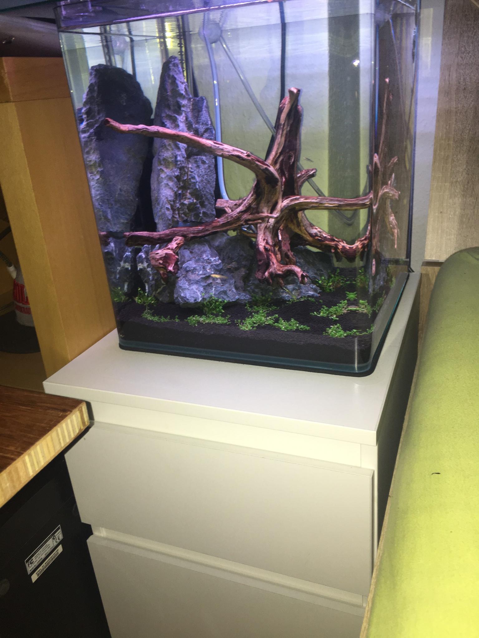 Aquarium Unterschrank Ikea : frage zu ikea kallax als unterschrank f r zwei 30x30x35 cubes aquarium forum ~ Watch28wear.com Haus und Dekorationen