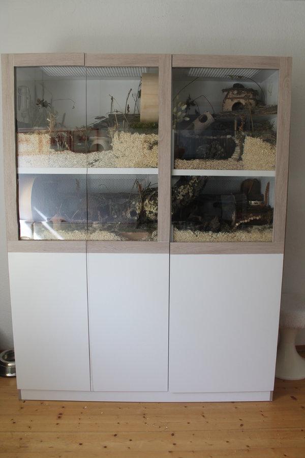 sonstiges die hamster vitrine 140x50 auf zwei ebenen gehegevorstellung. Black Bedroom Furniture Sets. Home Design Ideas