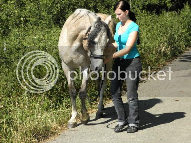 sammelthread was macht ihr so am boden was kann ich meinem pferd noch beibringen forum. Black Bedroom Furniture Sets. Home Design Ideas