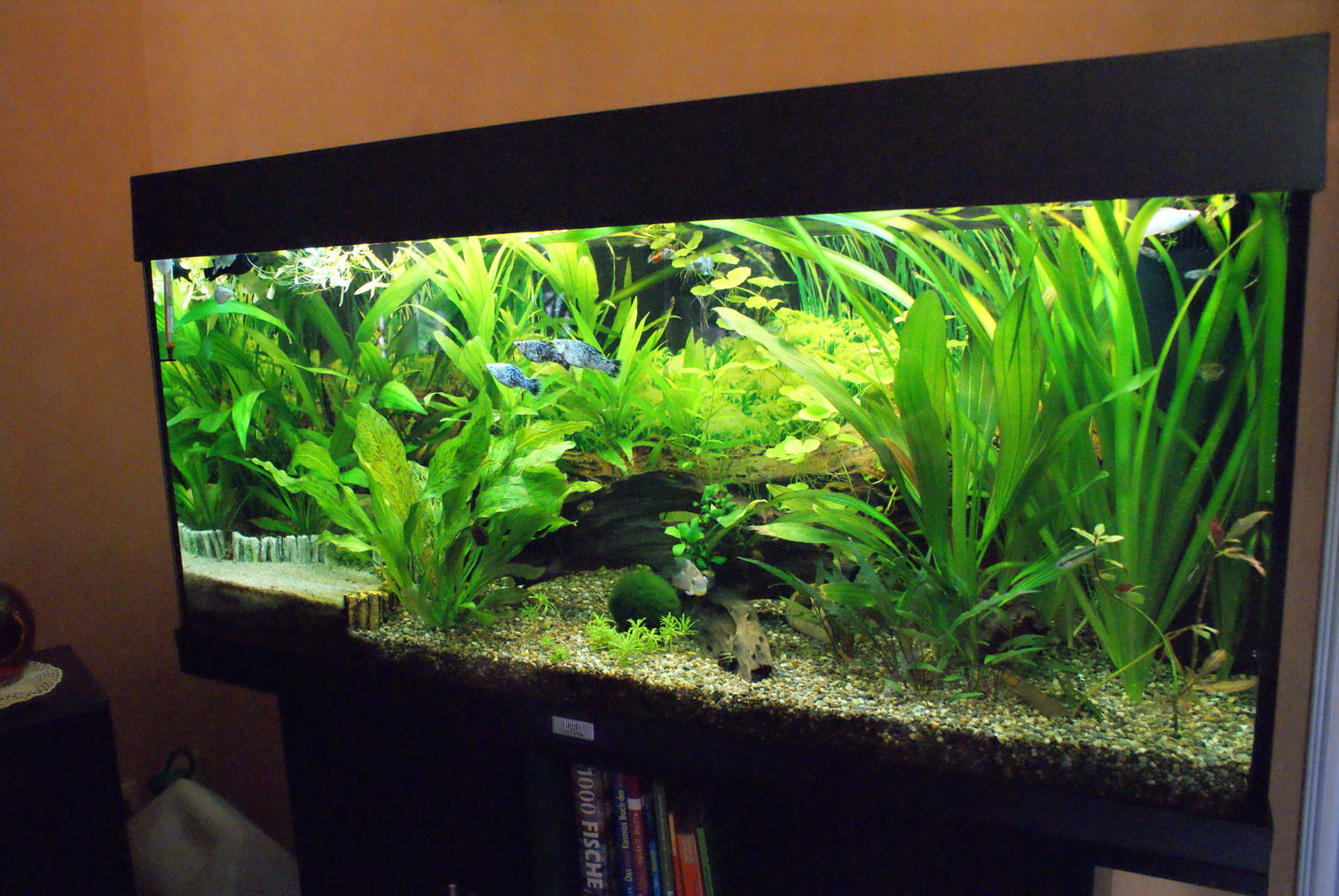 Mein 180 liter aquarium seite 4 aquarium forum for Aquarium einrichtung
