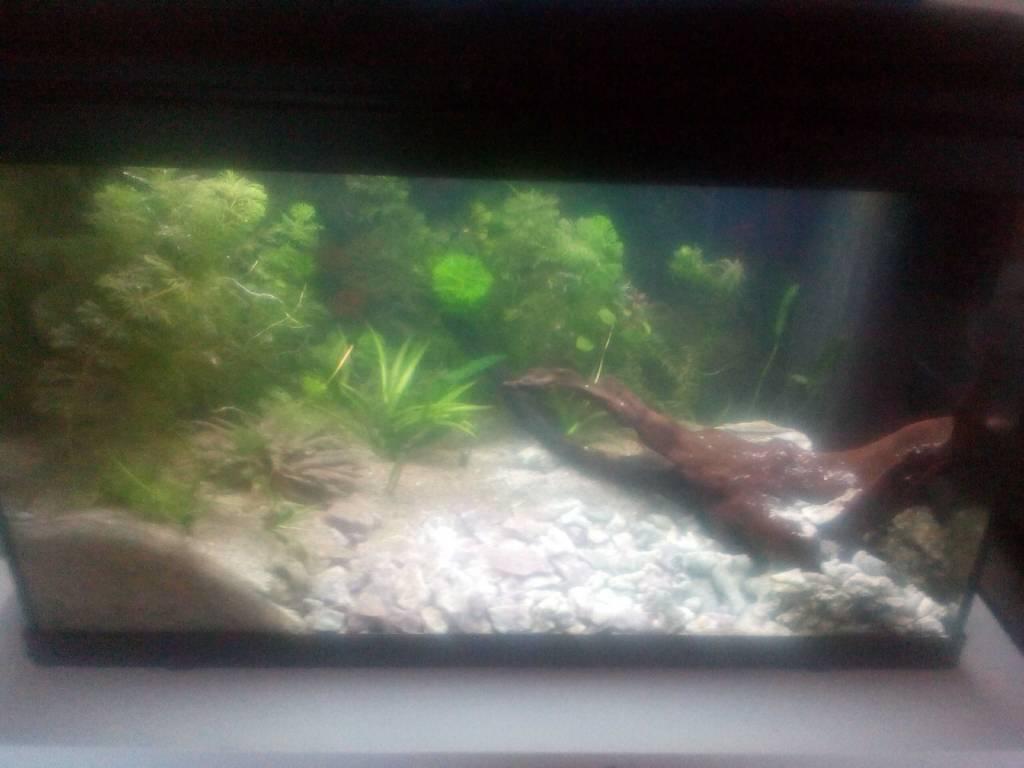 erstes aquascape becken eingerichtet aquarium forum. Black Bedroom Furniture Sets. Home Design Ideas