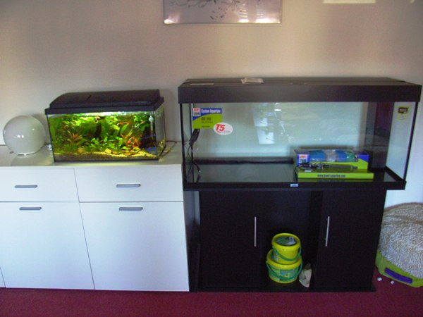 240 l von anfang an aquarium forum. Black Bedroom Furniture Sets. Home Design Ideas