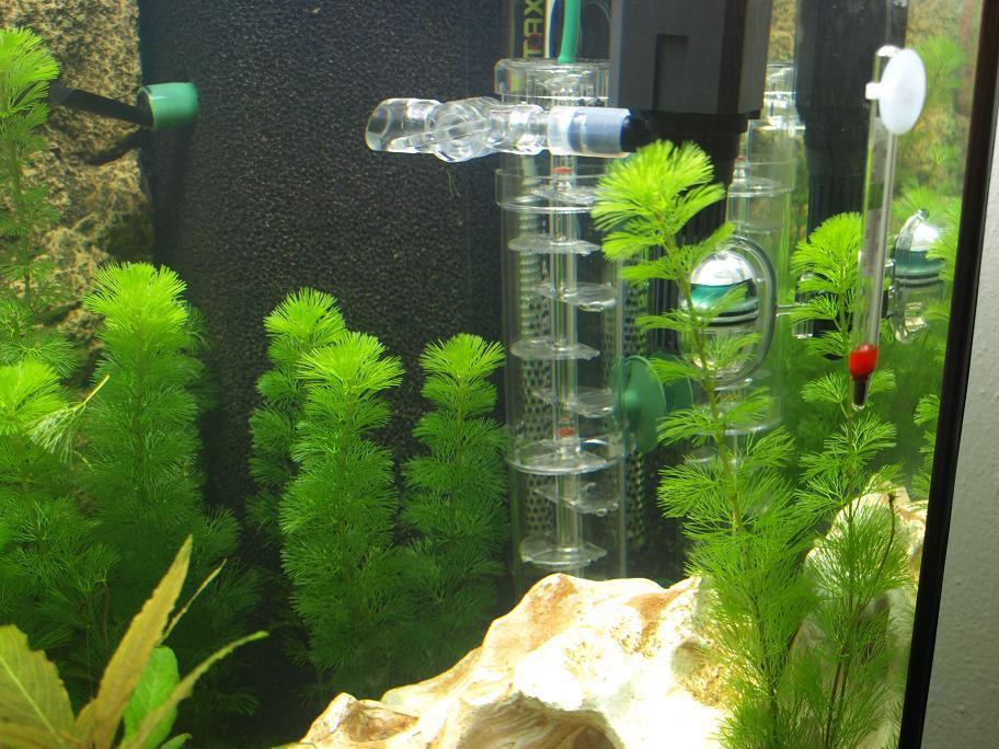 mein gesellschaftsbecken 350 liter aquarium forum. Black Bedroom Furniture Sets. Home Design Ideas