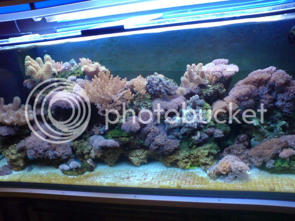 500 liter winkel aquarium bilderupdate achtung viele bilder mittlerweile seite 2. Black Bedroom Furniture Sets. Home Design Ideas