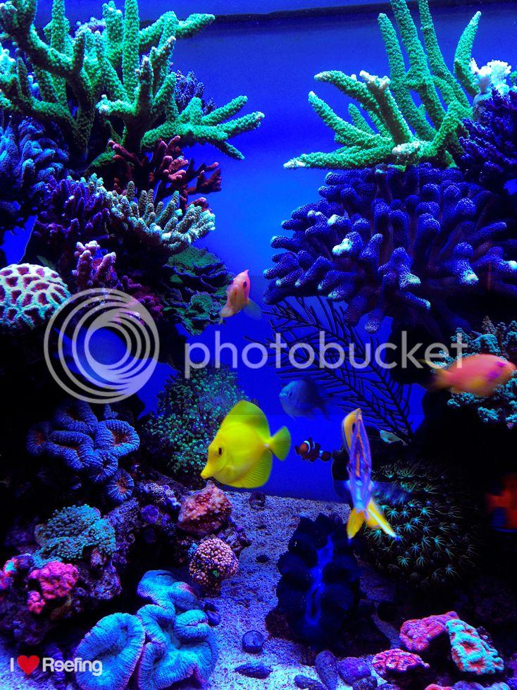 whitecorals 560l - 130 x 60 x 60 - Seite 4 - Aquarium Forum