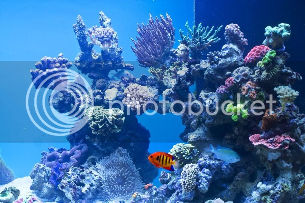 whitecorals 560l - 130 x 60 x 60 - Aquarium Forum