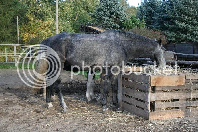 Heuraufe f r pferd und zwei shettys auf der weide for Boden heuraufe pferd