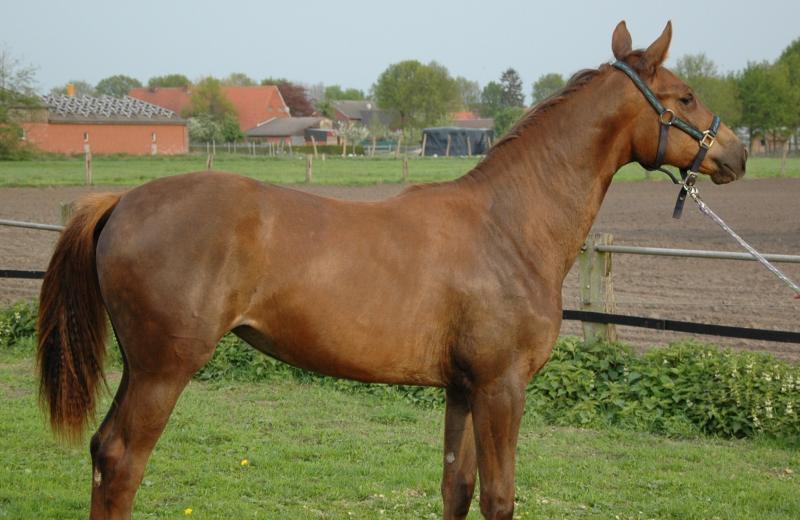 Exterieurbeurteilung seite 181 for Exterieur beurteilung pferd
