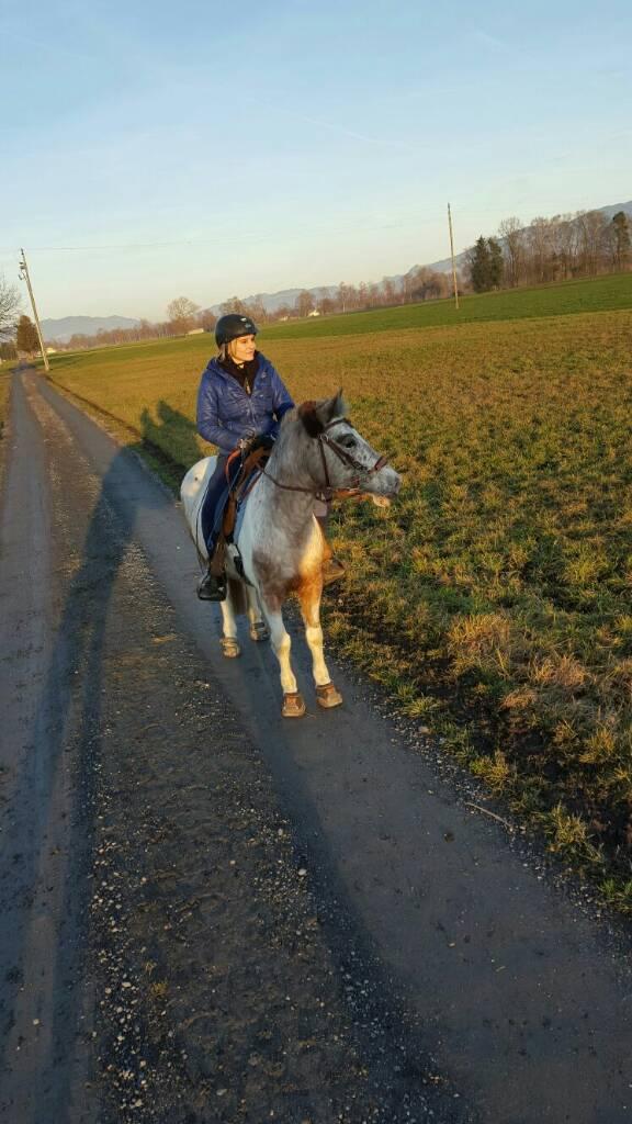 Meine Stute decken? - Forum Pferd.de