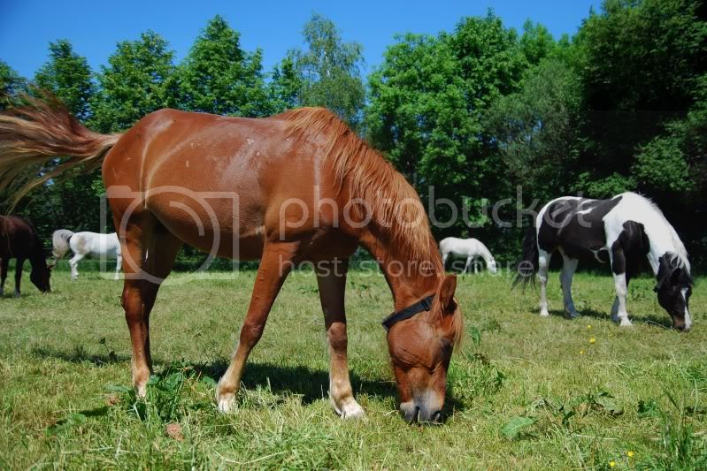 Reitbeteiligung pferd kennenlernen