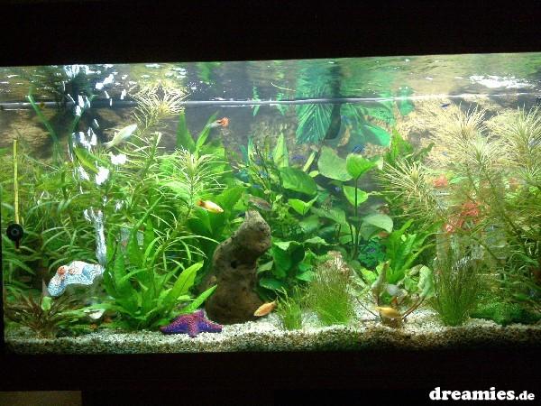 Einlaufphase wann der erste wasserwechsel aquarium forum for Aquarium wasserwechsel